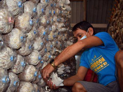 Feature: Mushroom growing brings sustainable income to ex