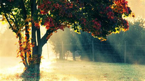 Autumn Morning Wallpapers | HD Wallpapers | ID #12237